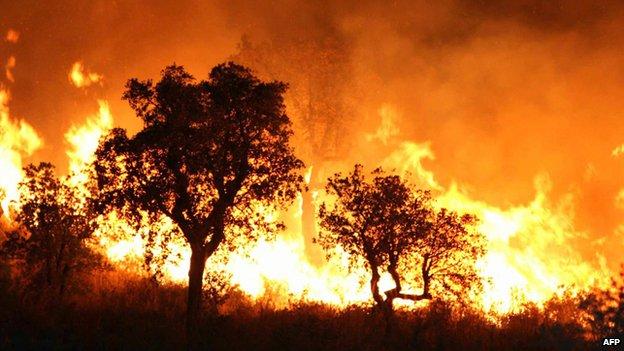 Forest fire near Tlemcen in Algeria