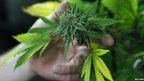 post-image-Colorado marijuana shops report strong sales