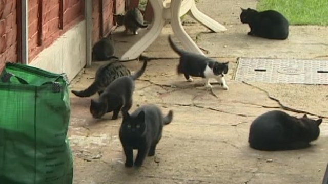 Seven cats milling around