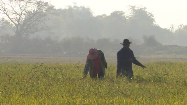 Thai farmers in field