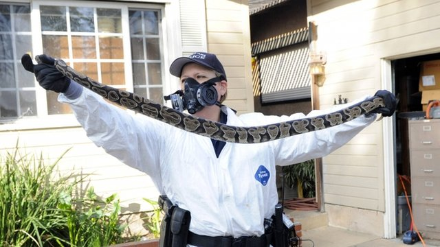 Health official finds dead snake in southern California home