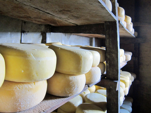 Goma cheese stacked on shelves