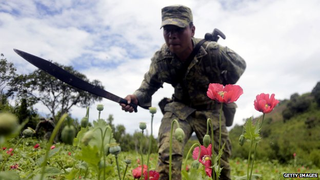 Mexican soldiers cut off poppy flowers during an operation at Petatlan hills in Guerrero state, Mexico, on 28 August 2013