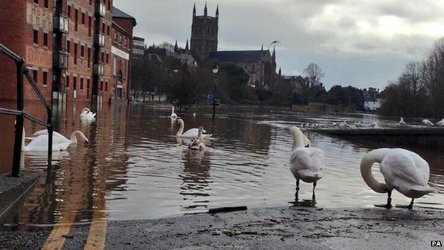 Swans on South Parade in Worcester