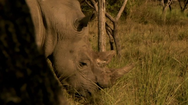 Rhino in wild in South Africa