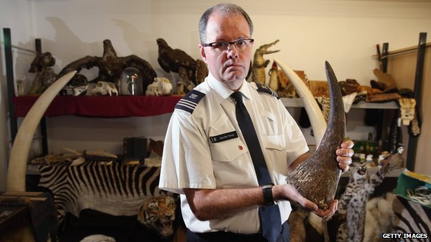 A UK Border Force agent holds a rhino horn