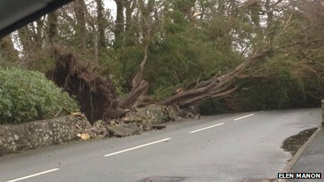 Tree down at Lon Ceredigion, Pwllheli