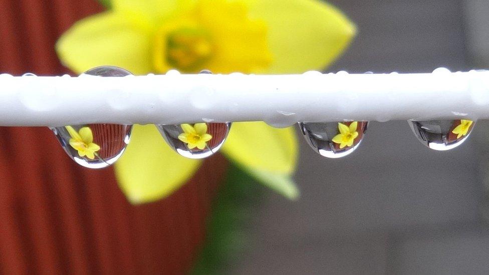 Raindrops on a washing line