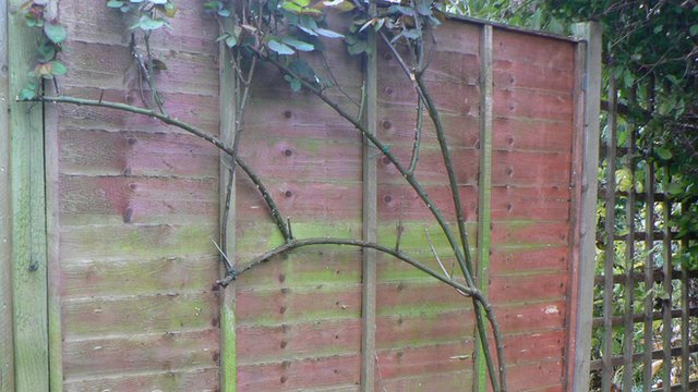 A garden fence