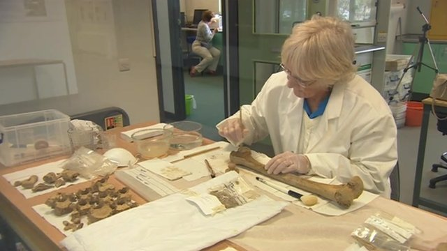 Bones being cleaned for tests to take place