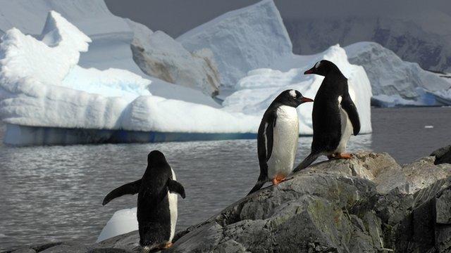 Penguins on Antarctica