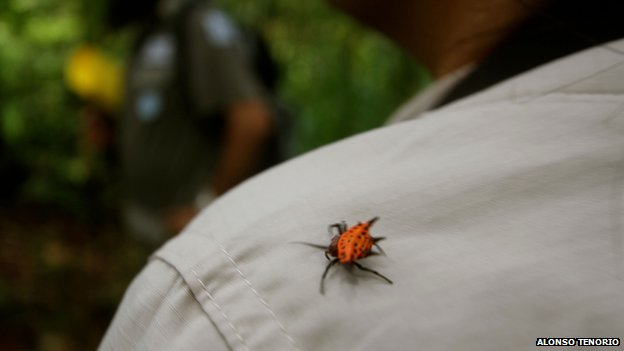 Red-shelled spider