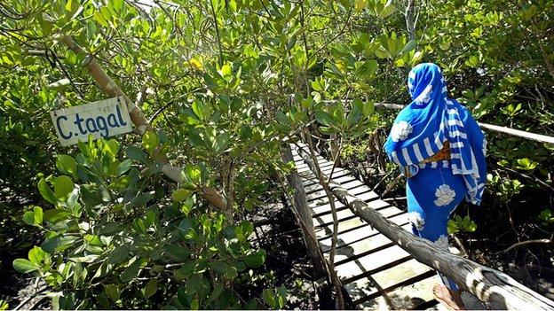 A visitor taking a board-walk through a mangrove forest in Malindi, Kenya (19 May 2007)