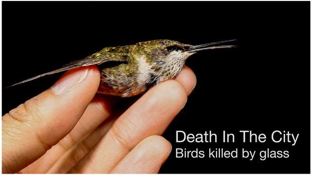 A dead hummingbird held in a hand