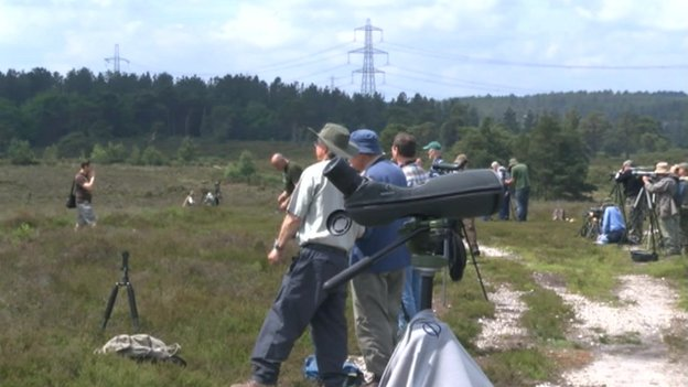Bird watchers at Morden Bog, near Wareham