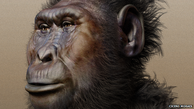"Paranthropus boisei, ""nutcracker man"""