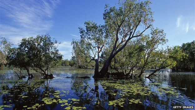 General view of wetlands in Kakadu National Park, Northern Territories, Australia