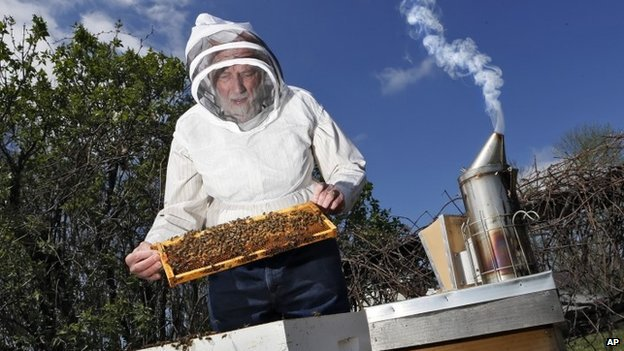 Barry Conrad inspects his honey bees at his Canal Winchester, Ohio, honey farm 23 April 2014