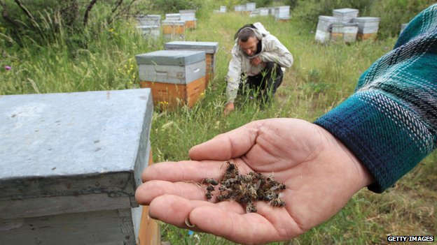 Widespread impacts of neonicotinoids 'impossible to deny'