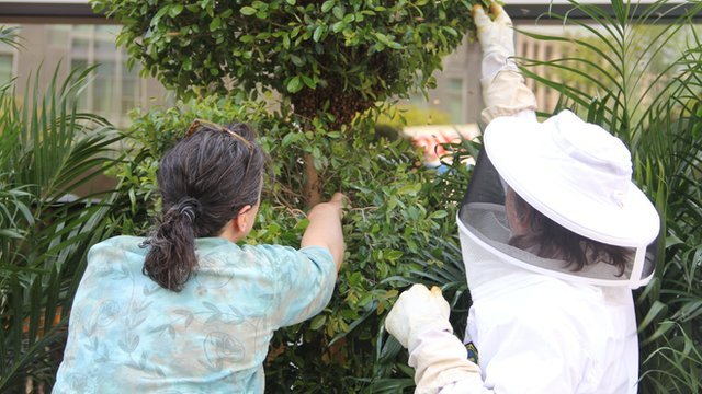 Beekeepers tend to a hive