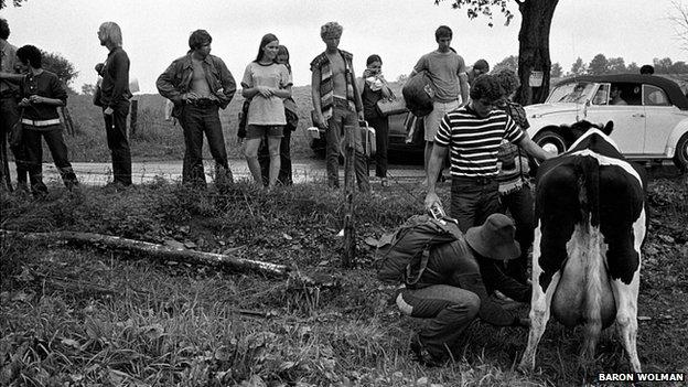 Woodstock cows