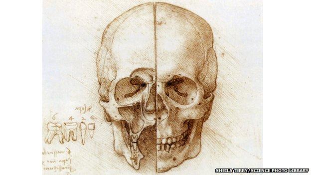 Skull anatomy drawing by Leonardo da Vinci
