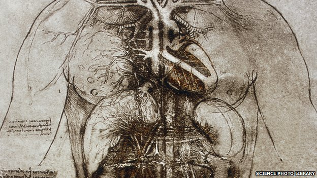 Leonard's drawings of the female anatomy, including the heart and main organs