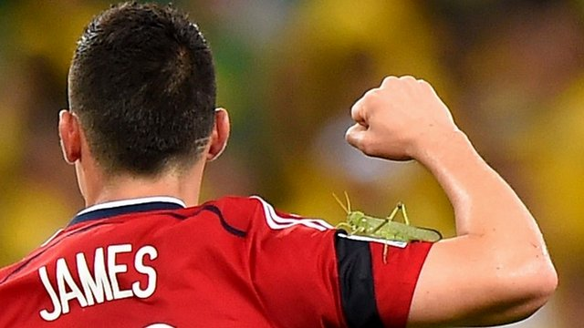 Giant bug hops on James Rodriguez after penalty