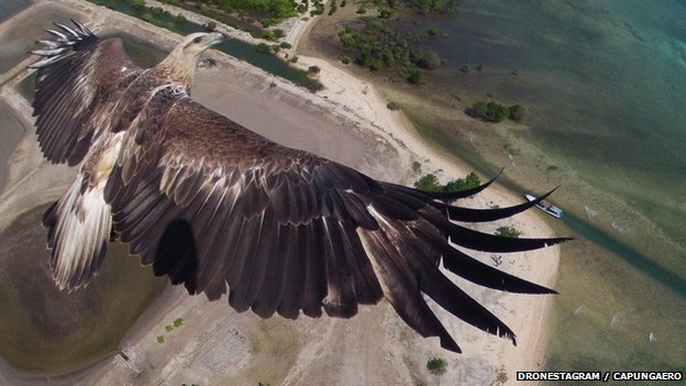 eagle shot-techcribng2