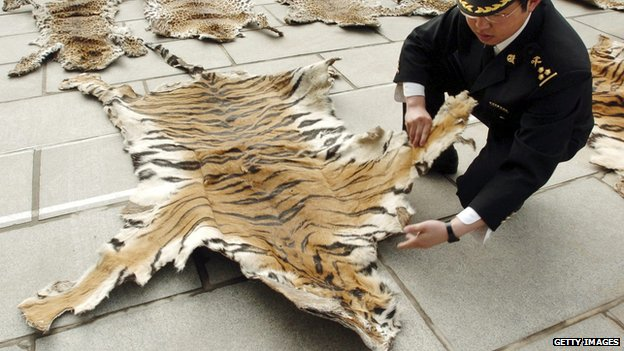Chinese customs official with tiger skin
