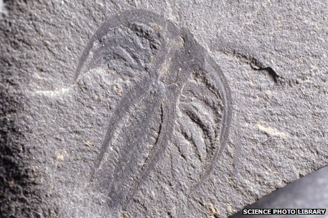 Marrella arthropod fossil