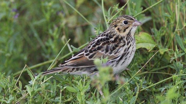 Software can decode bird songs