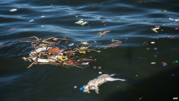 A dead cat floats on the dark waters of Guanabara Bay