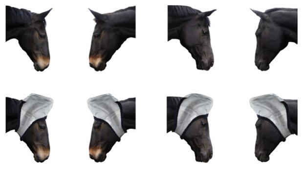 Horse images used in a study of horse communication