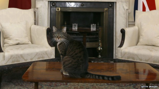 George Osborne's cat Freya