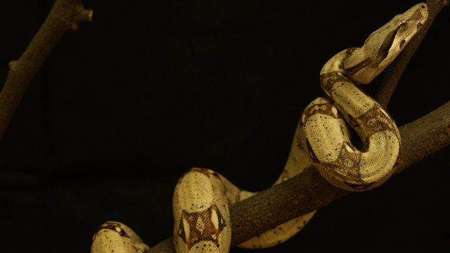Biologists measured the force snakes exerted while climbing a vertical pipe.