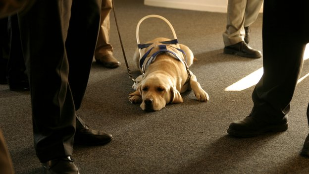 A guide dog lying down asleep in the middle of a group of people