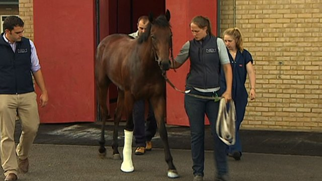 Newmarket Equine Hospital treats an injured racehorse