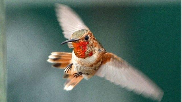 Hummingbird in LA