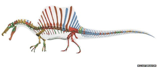Reconstruction of Spinosaurus