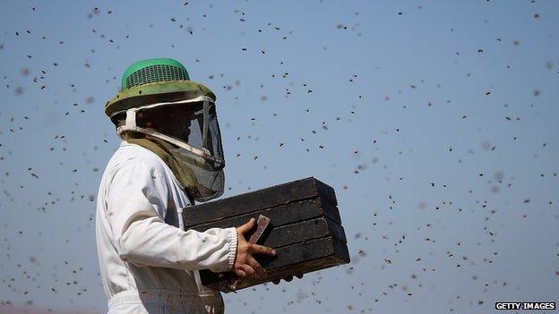 Beekeeper in California