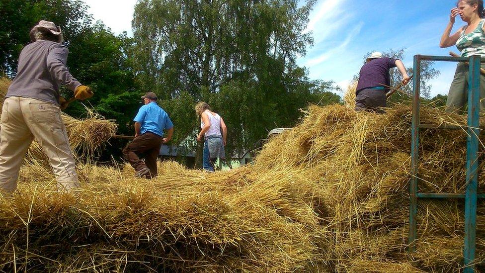 Mae hi fel cynhaeaf gwair! // Its like the haymaking season!