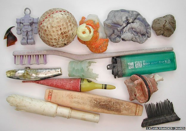 Plastic objects found in albatross chick carcasses include a toothbrush, cigarette lighters, floaters from fish nets, toys and a tampon applicator