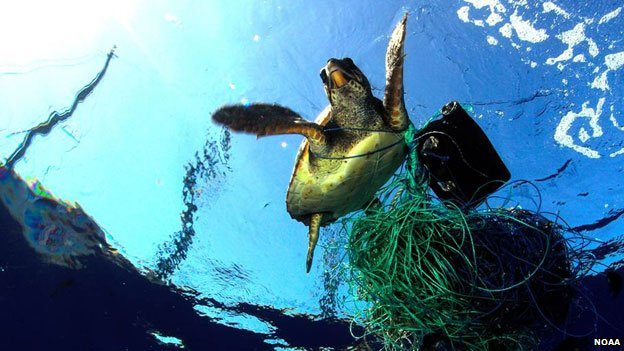 A turtle entangled in netting and other debris