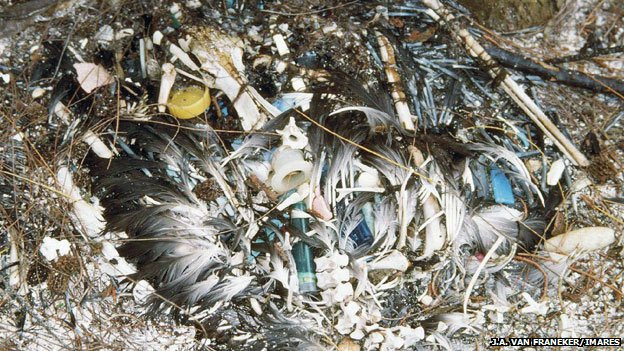 An albatross carcass shows the amount of plastic it had ingested