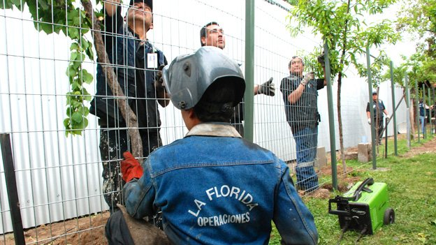 Workers build a fence around a cannabis plantation in Chile in October 2014