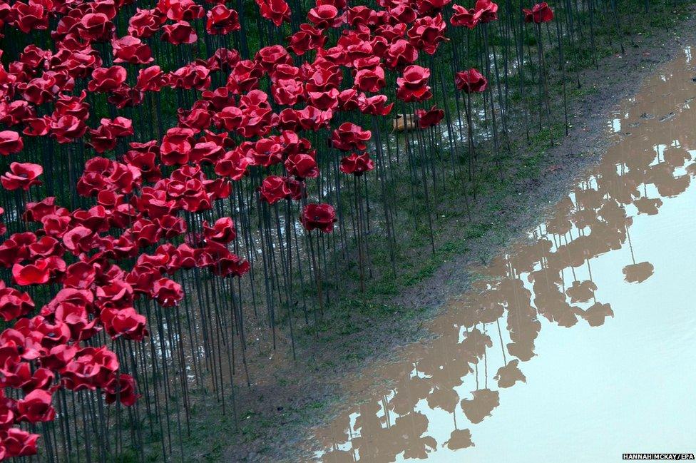 Red ceramic poppies (2 November 2014)