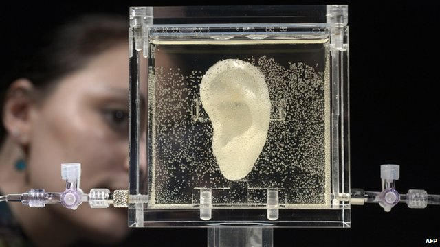 A woman looks at the living replica of Vincent van Gogh's ear