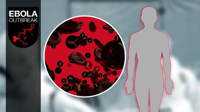 Blood serum graphic