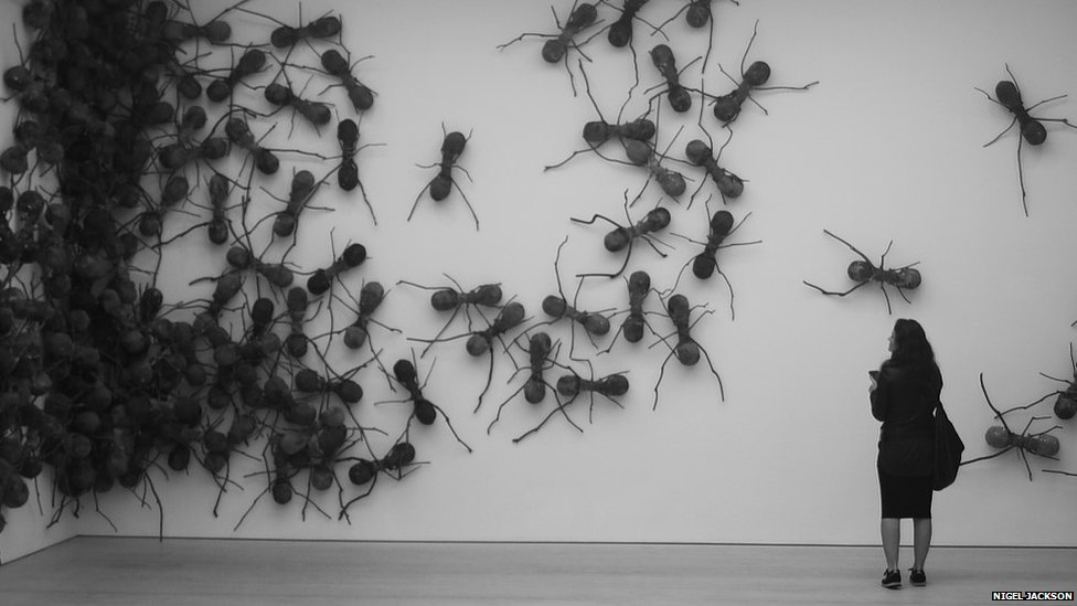 Woman looks at models of large insects on a wall in Saatchi Gallery